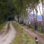 Coulissenlandschap in de omgeving van camping Renskers Winterswijk