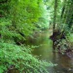 Bosrijke omgeving camping Renskers